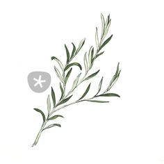 """""""Rosemary"""" Drawing by Ellyce Moselle buy now as poster, art print and greeting card.."""