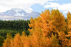 At Estes Park, gateway to Rocky Mountain National Park, fall is announced by the sound of bugling bull elk and the sight of bighorn sheep butting heads, beginning in mid- to late September.