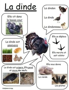 Nature Animals - Welcome my homepage Nature Animals, Animals For Kids, Farm Animals, Animals And Pets, How To Speak French, Learn French, Core French, French Education, French Classroom
