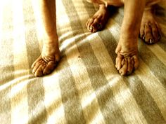 sphynx toes