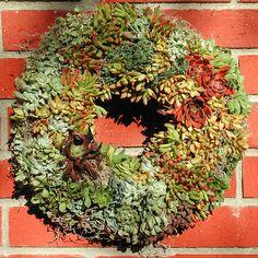 Linda Estrin Succulent Floral Design - Linda Estrin Garden Design + Succulent Arts, Agoura, CA