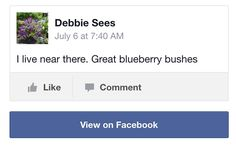 Blueberry Bushes Review