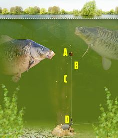 Top 5 pole rigs that you need to try! — Angling Times