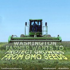 Washington Farmer Wants To Protect Growers From GMO Seeds. More Here: http://fooddemocracynow.org/blog/2013/oct/9/farmer_wants_to_protect_growers_from_GMO_seeds/