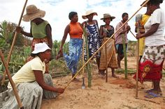 Villagers from Ankirikiriky in southern Madagascar are replanting deforested land in return for food rations from the World Food Programme (Jan Food Rations, World Food Programme, Replant, Largest Countries, Southern, Asia, Blue And White, Inspired, Pictures