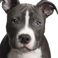 mean dog names for pitbulls