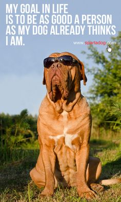 My goal in life is to be as good a person as my dog already thinks I am #spartadog #dogs #quotes