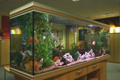 Large Acrylic Aquariums - Website of jasegoth!