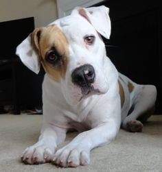 If you're lucky enough to share your life with a Pit Bull, or a dog who falls under the bully breed category, you know it takes a special kind of person to take on the challenge of loving a breed that has such an undeserved bad rep.
