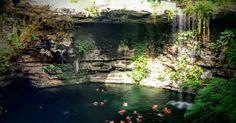 Cenote Saamal! A fabulous sinkhole/swimhole near Cancun, Mexico!