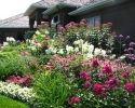 50 Large Planters, Outdoor Planters, Flower Planters, Hanging Planters, Flower Pots, Outdoor Gardens, Thyme Plant, Air Cleaning Plants, Florida Plants