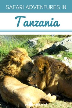 From the dusty plains of the Serengeti to a haven of wildlife in the Ngorongoro Crater, here's part 2 of my safari adventures in Tanzania. Places To Travel, Travel Destinations, Places To Go, Safari Adventure, Adventure Travel, Travel Trailer Insurance, Travel Trailers, Tanzania Safari, World Travel Guide