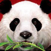 Connecting to the iTunes Store. Panda Love, Panda Bear, Best Games, Fun Games, Wild Panda, Bobby S, Casino Slot Games, New Readers, Best Blogs