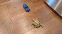 And the internet died of cuteness overload. | Watch This Baby Tortoise Pursue A Toy Car In The Cutest Way Possible