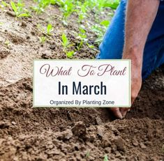 growing strawberries in containers What to Plant In March (By Planting Zone)