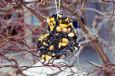 These photos are actually from a pastwinter, my Dad and I always love making these all natural bird treats for all of our flying friends who stick around for the cooler months. I shared this as a …