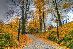 Beautiful colors - Autumn in Oslo, Norway