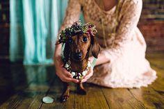 a dachshund wedding by Danfredo Photos + Films - more pet inspiration at jojotastic.com