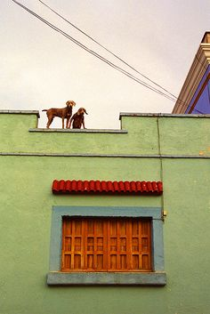 dogs on the roof, Oaxaca, Mexico