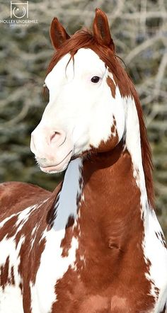 Cowboy Magic Page Liked · 22 hrs · THAT FACE Thinkin Strait APHA Stallion. Owner and Photographer: Holley Underhill Equine Photography