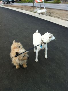 JoJo & Buddy checking out the construction of the new promenade along the ocean in Pleasure Point