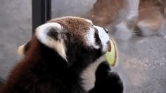 """WORK WITH ME HERE, APPLE."" 