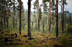 Äkäsjärvi, Muonio in Finnish Lapland. Photo by Jani Kärppä. #filmlapland #arcticshooting #finlandlapland