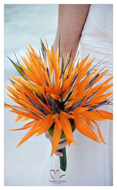 Designer Birds of Paradise bridal bouquet Bridal Bouquet Gallery - wedding in florida