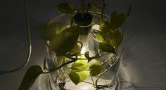 light pflanze