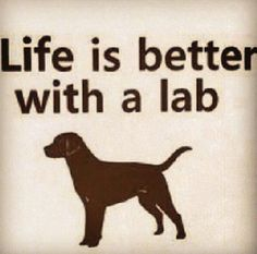 Says it all by labradors4life