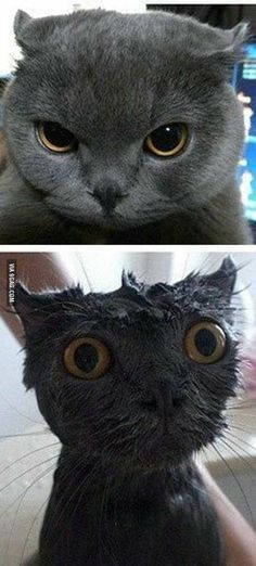 Is your pet not cute enought? Just add water