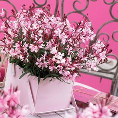 Gaura  I have some of this and it's my favorite.  Some yrs it comes back and some yrs I have to buy another.  It flows and sways in the wind and I love it.