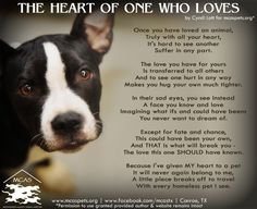 Once you have loved one, you love them all... Because I've given MY heart to a pet it will never again belong to me, a little piece breaks off to travel with every homeless pet I see.