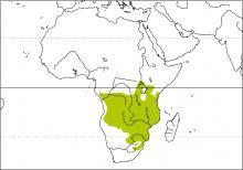 Image from http://www.hbw.com/sites/default/files/styles/medium/public/maps/arrow-marked-babbler-turdoides-jardineii-distribution-map.jpg?itok=EfPzLtgz.