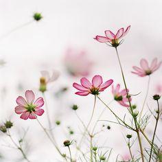 tere bloemen