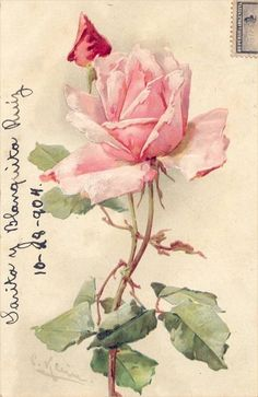 Inspiration Lane: Pink rose on postcard Art Vintage, Vintage Cards, Vintage Flowers, Vintage Postcards, Vintage Prints, Vintage Images, Vintage Floral, Catherine Klein, Rose Images