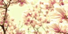 Petals Flower Bright