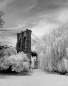 Brooklyn Bridge & Willows  2008. From the park near the Brooklyn Bridge. Infrared film was used. Nice little details: baby carriages under one of the willows, and a little girl dashing from one tree to the other. You never quite know what you're going to get with infrared film. It forces you to imagine what things will look like; which is what it was like when I first began shooting film.