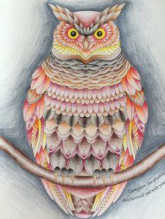 Millie marotta owl tropical wonderland