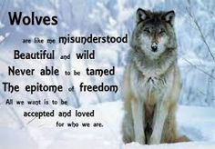 Image result for native american wolf quotes