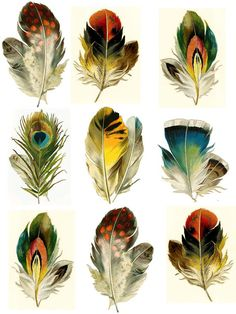 Série de 9 plumes - tatouages temporaires