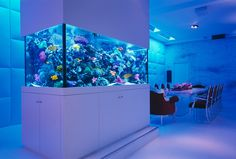 Are you seeking the top saltwater aquarium expert tips and resources for New York City Custom Aquariums & Ponds? Contact Okeanos Group for fresh & saltwater aquarium and pond design. Aquariums Super, Amazing Aquariums, Tanked Aquariums, Custom Aquariums, Marine Aquarium, Saltwater Aquarium, Aquarium Fish Tank, Fish Tank Wall, Aquarium Set