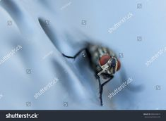 Closeup of a fly sitting on a metal bench Bees, Close Up, Butterflies, Insects, Metal, Image, Butterfly, Metals
