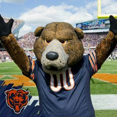 Image result for Stanley the bear, chicago bears