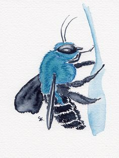 Month Of Daily Insects Stephanie Kilgast Contemporary - Day Blue Carpenter Bee Daily Insect Painting Watercolor On Paper Stephanie Kilgast Hello There We Are The St February Which Means The First Month Of My Daily Insect Art Challenge Is Over I Bee Painting, Painting & Drawing, Painting Inspiration, Art Inspo, Bee Drawing, Drawing Ideas, Sculpture Art, Sculptures, Bumble Bee Tattoo