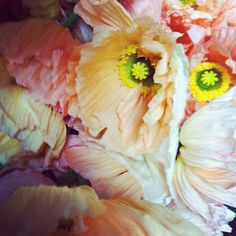 poppies up close and personal courtesy of poppiesandposiesevents.blogspot.com