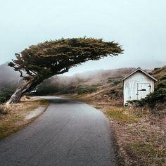 Winding roads in Marin County. Photo: @al3xtav by herschelsupply