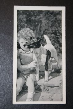 Fox Terrier Vintage B & W Photo Card VGC Item Number: 380951836588
