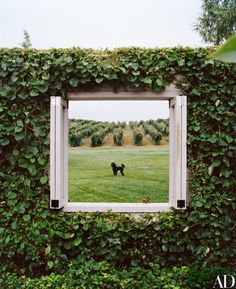 At Sherry and Alan Koppel's Michigan home, the Walled-In Garden opens to a vineyard view, where one of their beloved poodles, Rosey, poses | archdigest.com