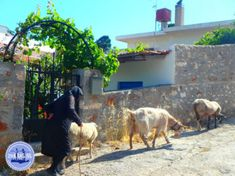 den Alltag vergessen - Zorbas Island apartments in Kokkini Hani, Crete Greece 2020 Zorba The Greek, Country Farm, Greece Travel, Crete, Sailing, Animals, Europe, Crete Holiday, Round Trip